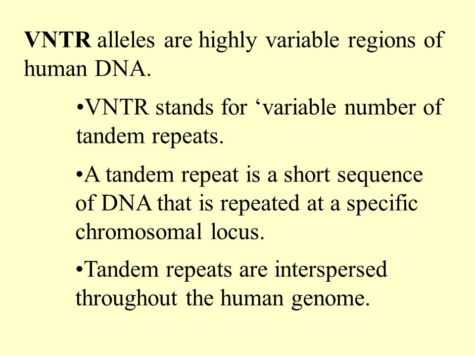 VNTR alleles are highly variable regions of human DNA.