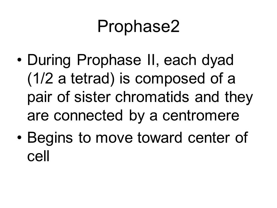 Prophase2 During Prophase II, each dyad (1/2 a tetrad) is composed of a pair of sister chromatids and they are connected by a centromere.