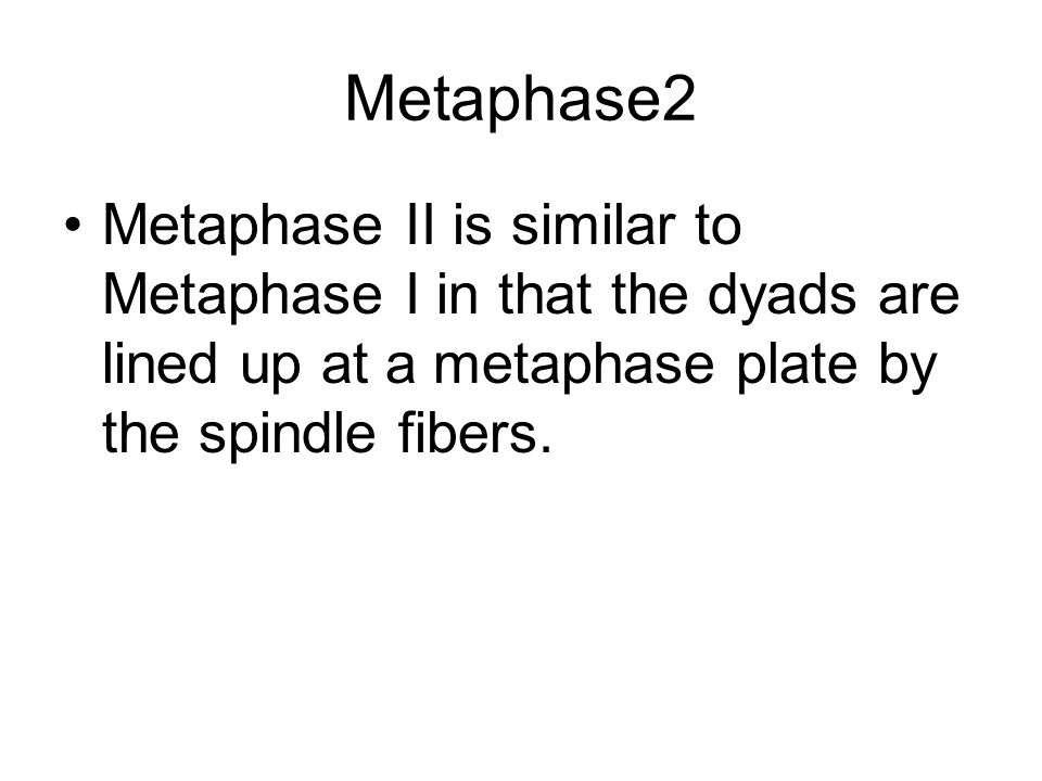 Metaphase2Metaphase II is similar to Metaphase I in that the dyads are lined up at a metaphase plate by the spindle fibers.