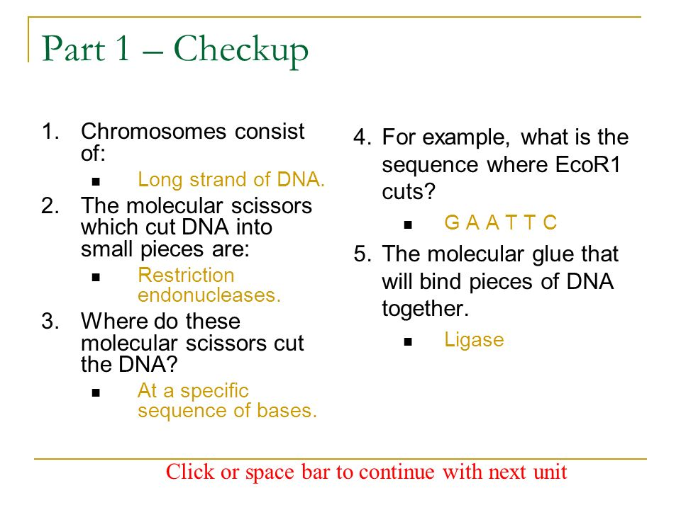 Part 1 – Checkup Chromosomes consist of:
