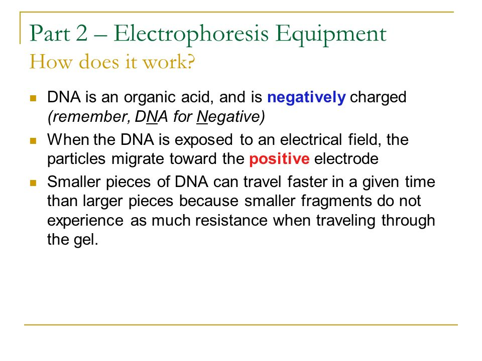 Part 2 – Electrophoresis Equipment How does it work
