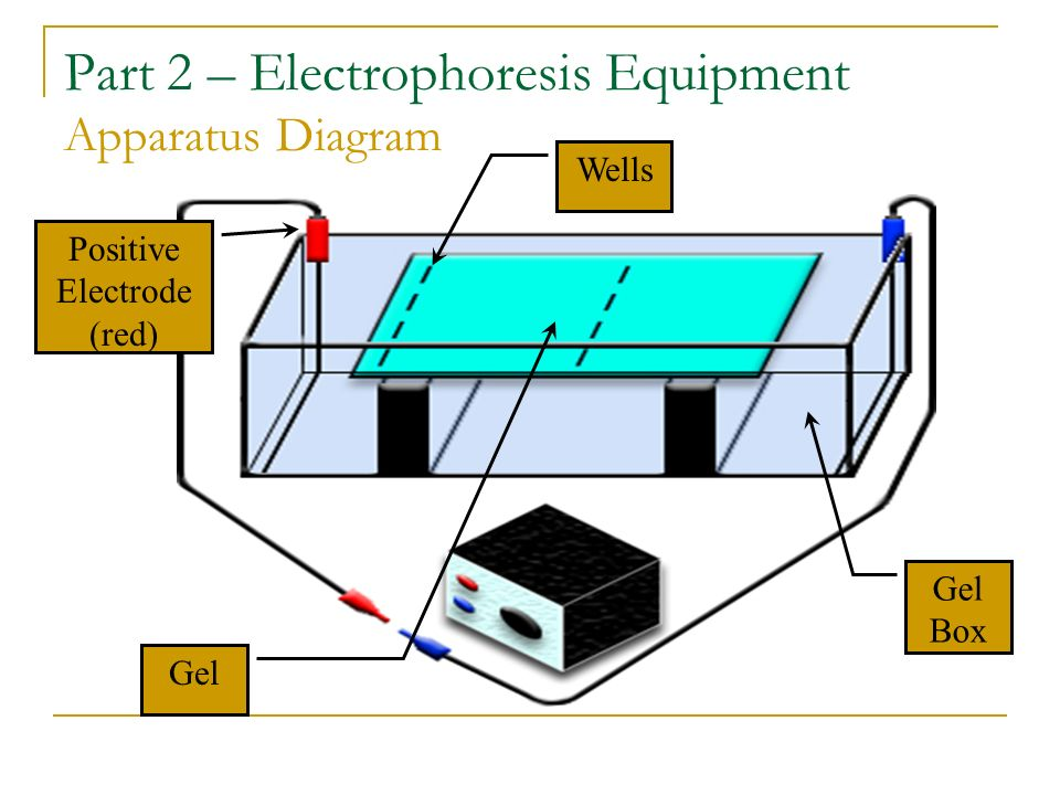 Part 2 – Electrophoresis Equipment Apparatus Diagram