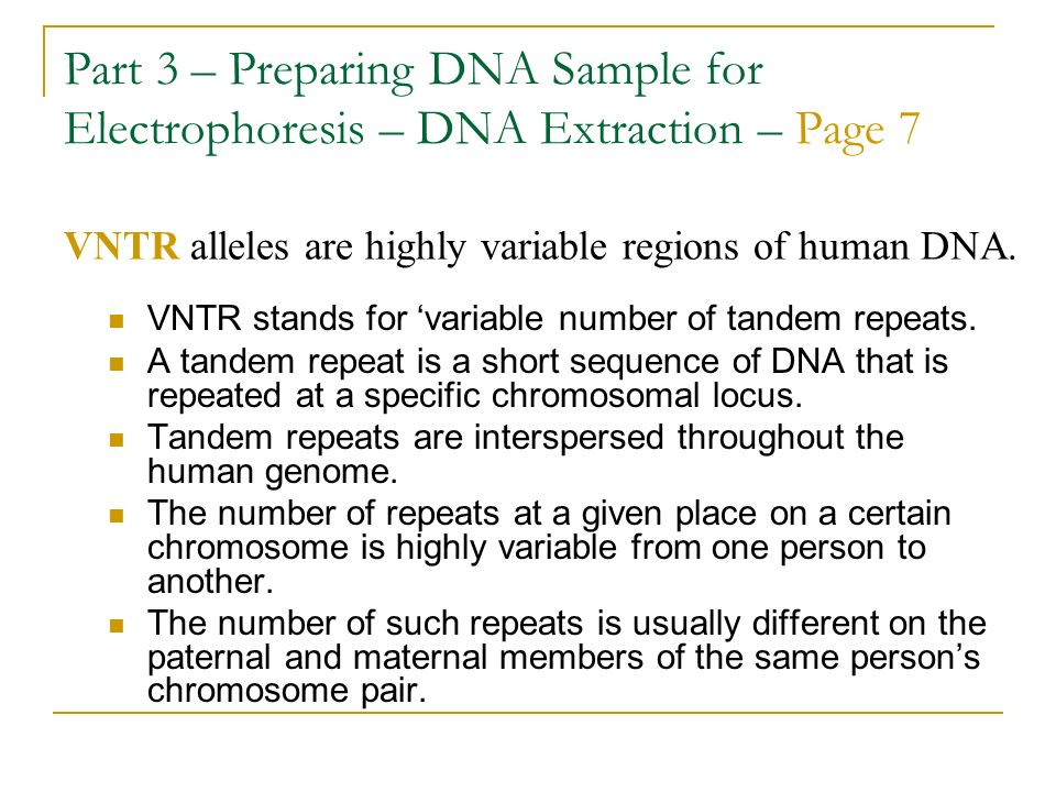 Part 3 – Preparing DNA Sample for Electrophoresis – DNA Extraction – Page 7