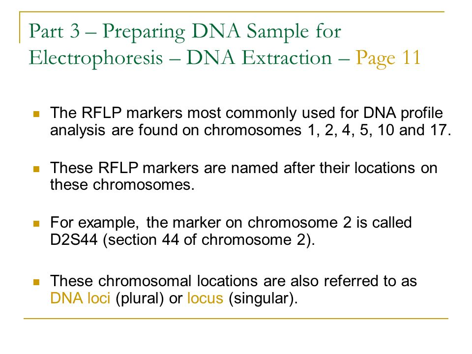 Part 3 – Preparing DNA Sample for Electrophoresis – DNA Extraction – Page 11