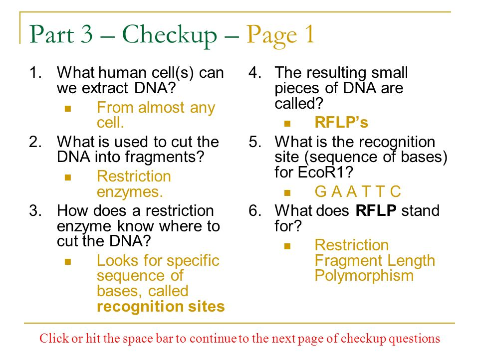 Part 3 – Checkup – Page 1 What human cell(s) can we extract DNA