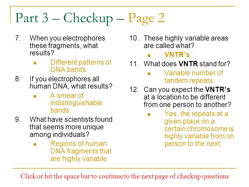 Part 3 – Checkup – Page 2 When you electrophores these fragments, what results Different patterns of DNA bands.