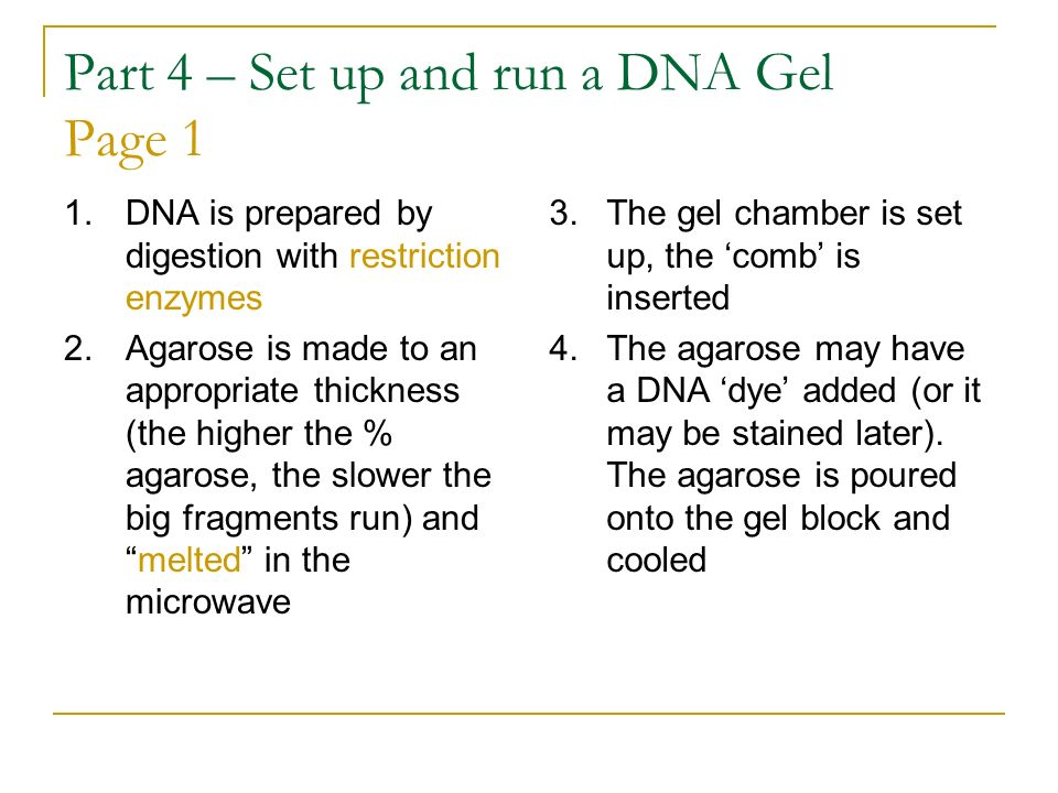 Part 4 – Set up and run a DNA Gel Page 1