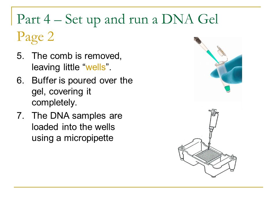 Part 4 – Set up and run a DNA Gel Page 2