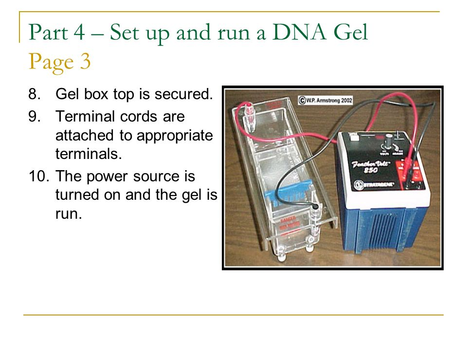 Part 4 – Set up and run a DNA Gel Page 3