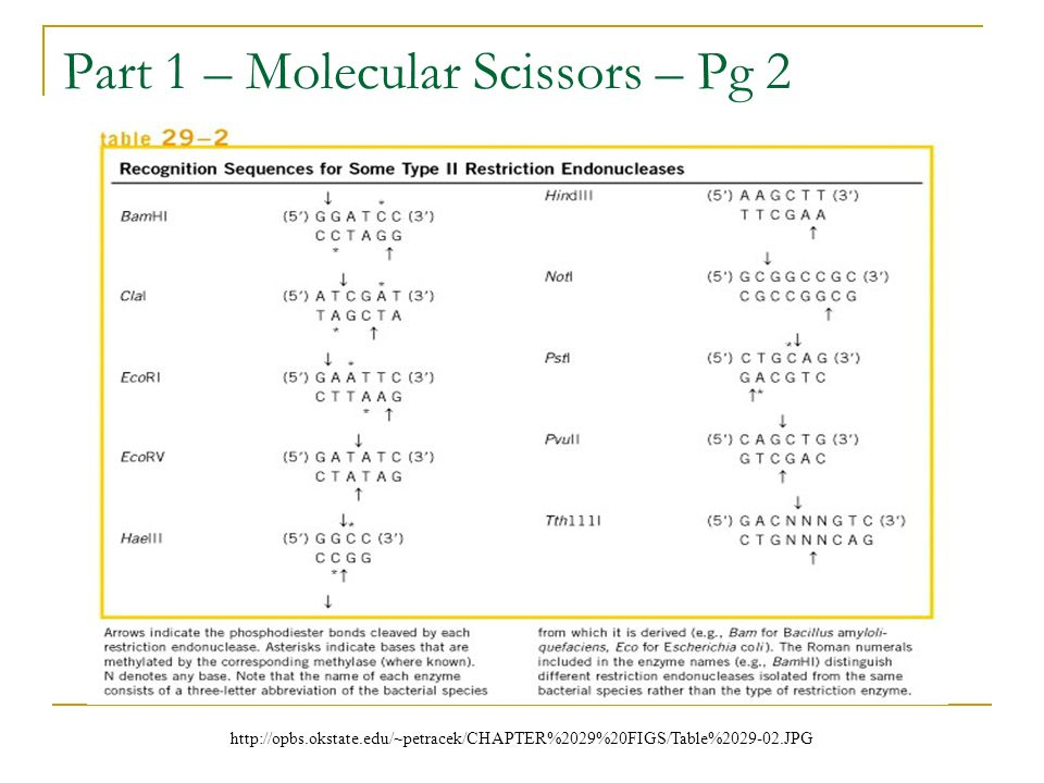 Part 1 – Molecular Scissors – Pg 2