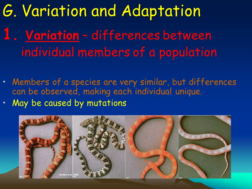 G. Variation and Adaptation