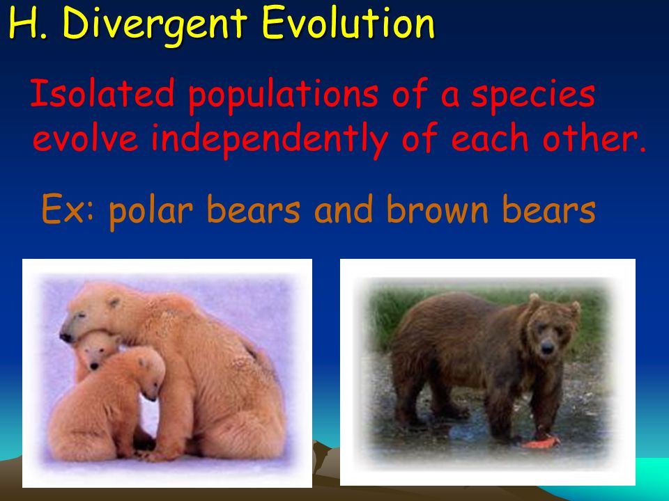 H. Divergent Evolution Isolated populations of a species evolve independently of each other.