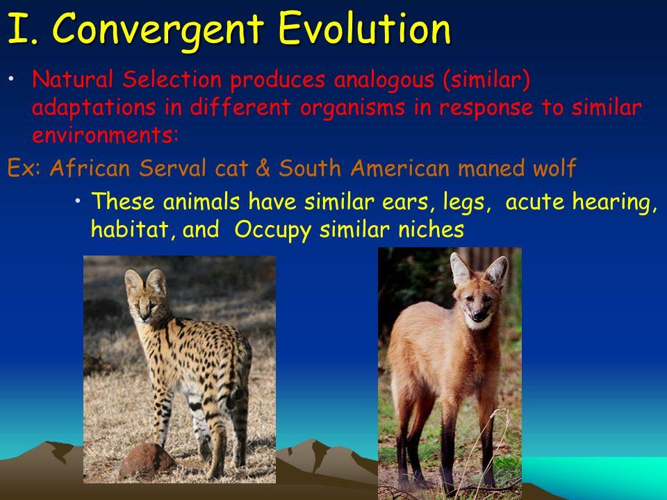 I. Convergent Evolution