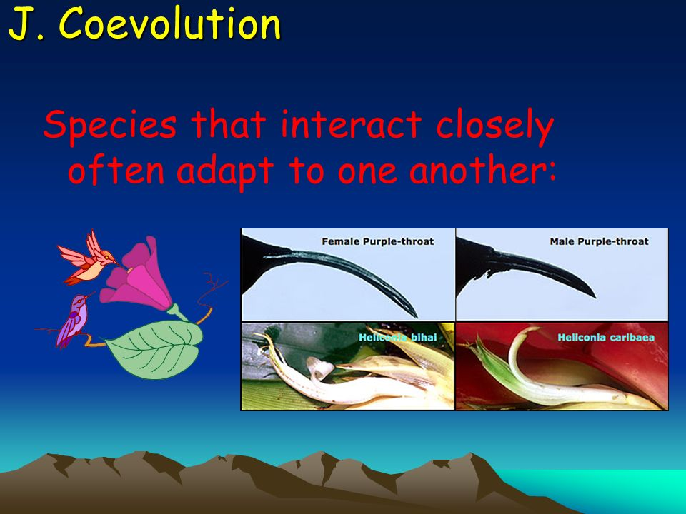 J. Coevolution Species that interact closely often adapt to one another: