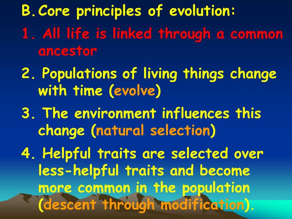 Core principles of evolution: