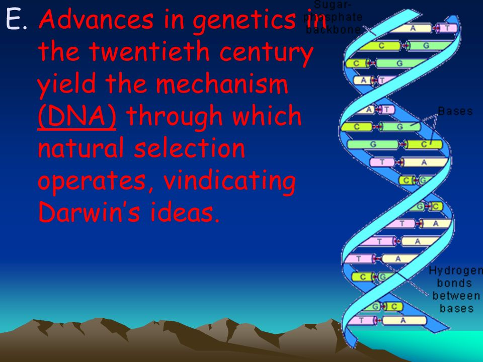 Advances in genetics in the twentieth century yield the mechanism (DNA) through which natural selection operates, vindicating Darwin's ideas.