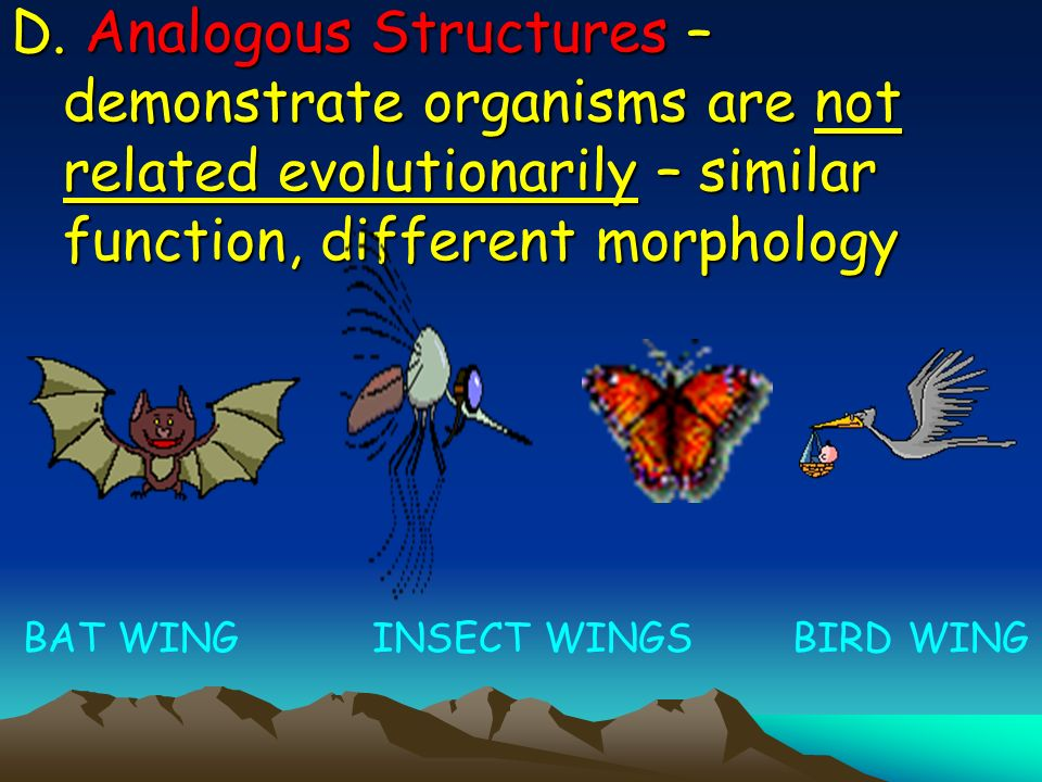 D. Analogous Structures – demonstrate organisms are not related evolutionarily – similar function, different morphology