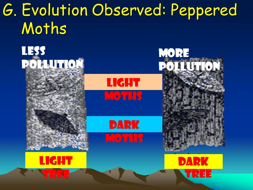 G. Evolution Observed: Peppered Moths