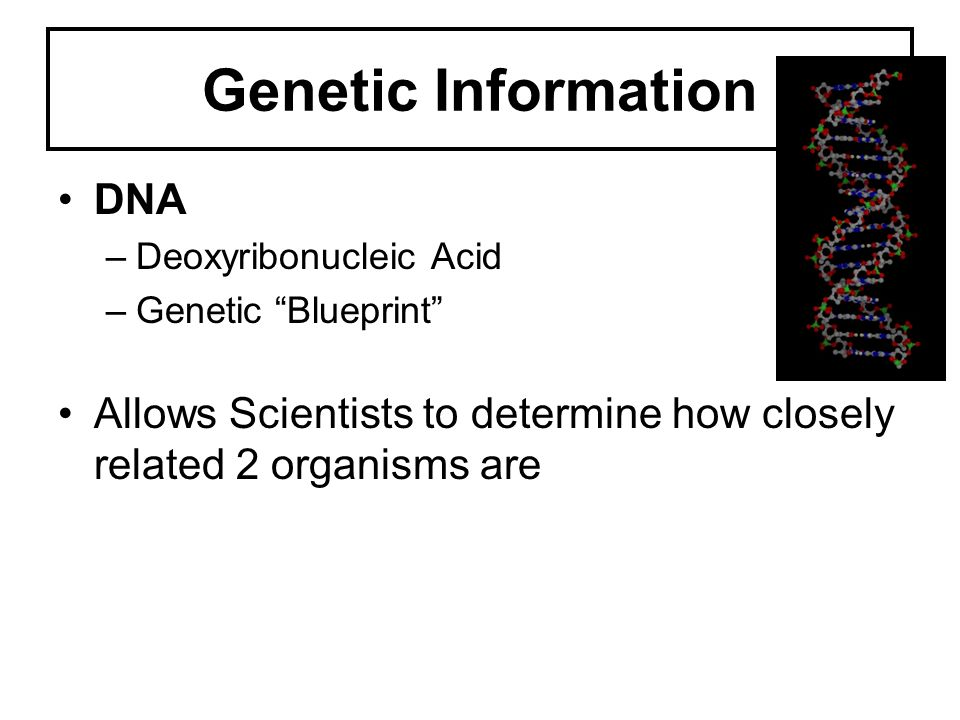 Genetic Information DNA