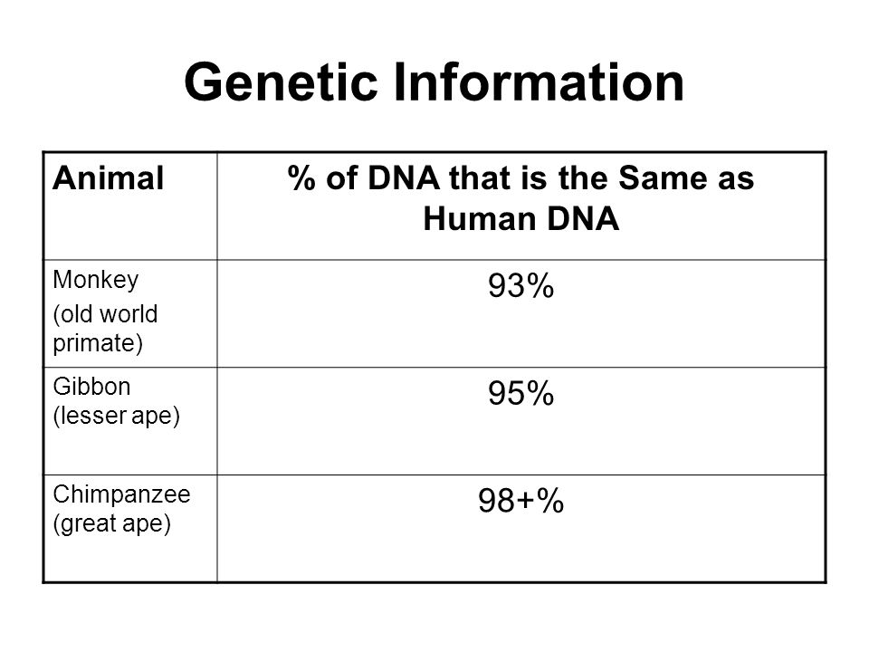 % of DNA that is the Same as Human DNA