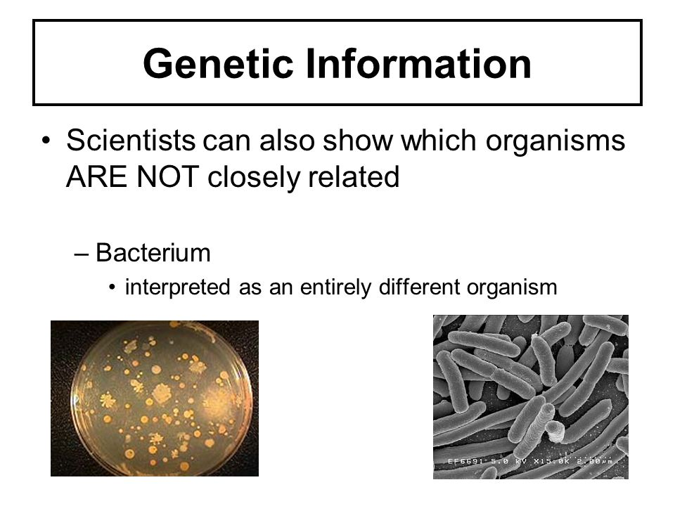 Genetic Information Scientists can also show which organisms ARE NOT closely related.