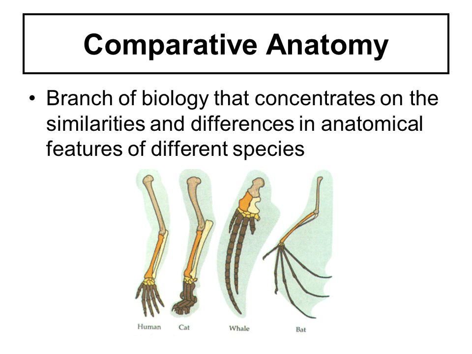 Comparative Anatomy Branch of biology that concentrates on the similarities and differences in anatomical features of different species.