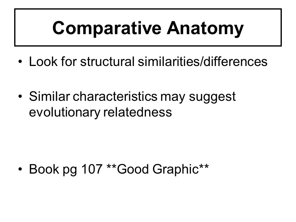 Comparative Anatomy Look for structural similarities/differences