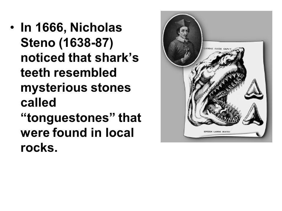 In 1666, Nicholas Steno ( ) noticed that shark's teeth resembled mysterious stones called tonguestones that were found in local rocks.