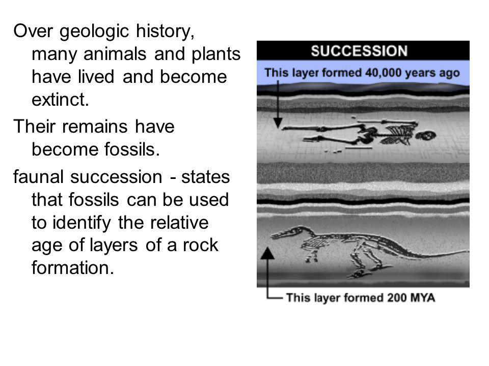 Over geologic history, many animals and plants have lived and become extinct.