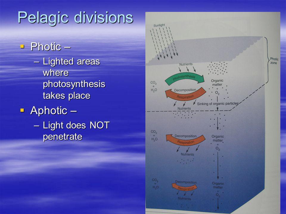 Pelagic divisions Photic – Aphotic –