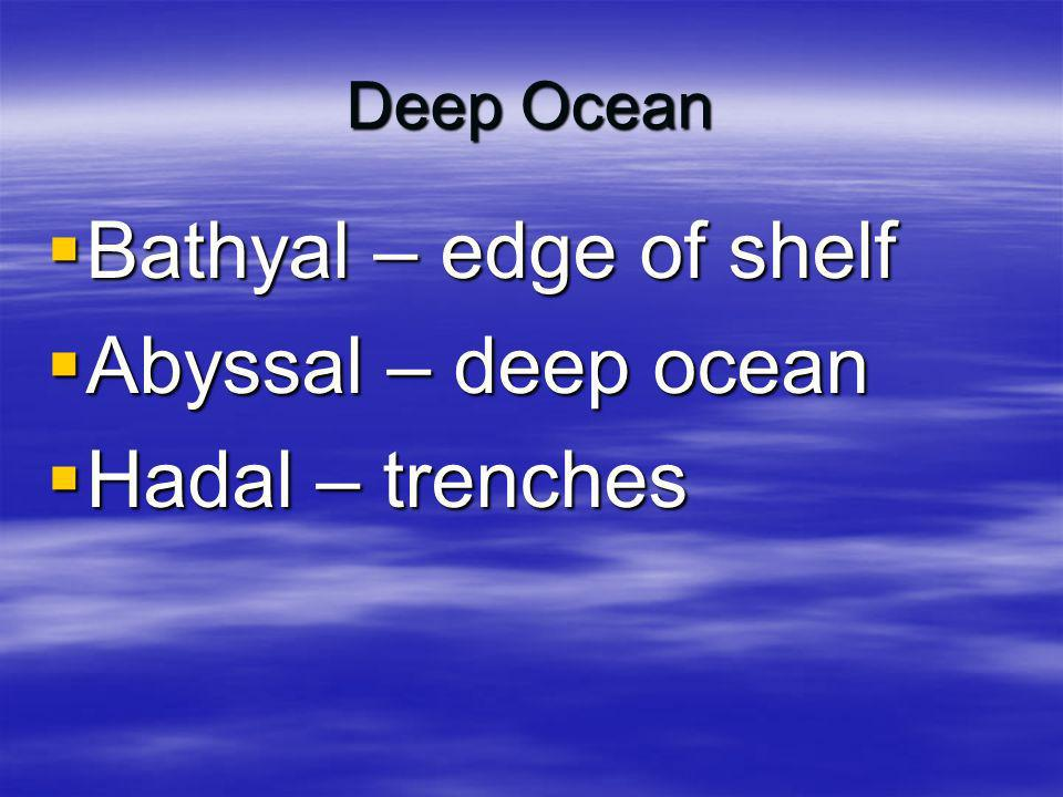 Bathyal – edge of shelf Abyssal – deep ocean Hadal – trenches