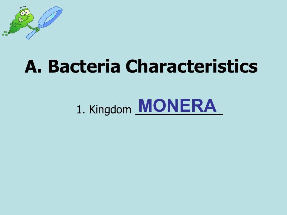 A. Bacteria Characteristics