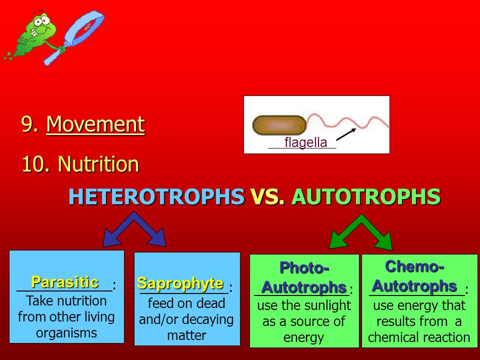 HETEROTROPHS VS. AUTOTROPHS