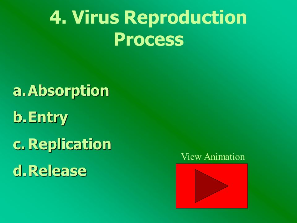 4. Virus Reproduction Process