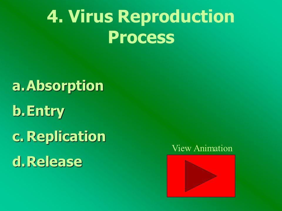 4. Virus Reproduction Process
