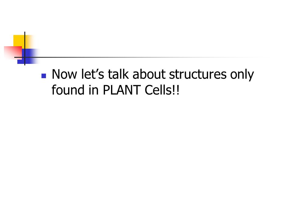 Now let's talk about structures only found in PLANT Cells!!