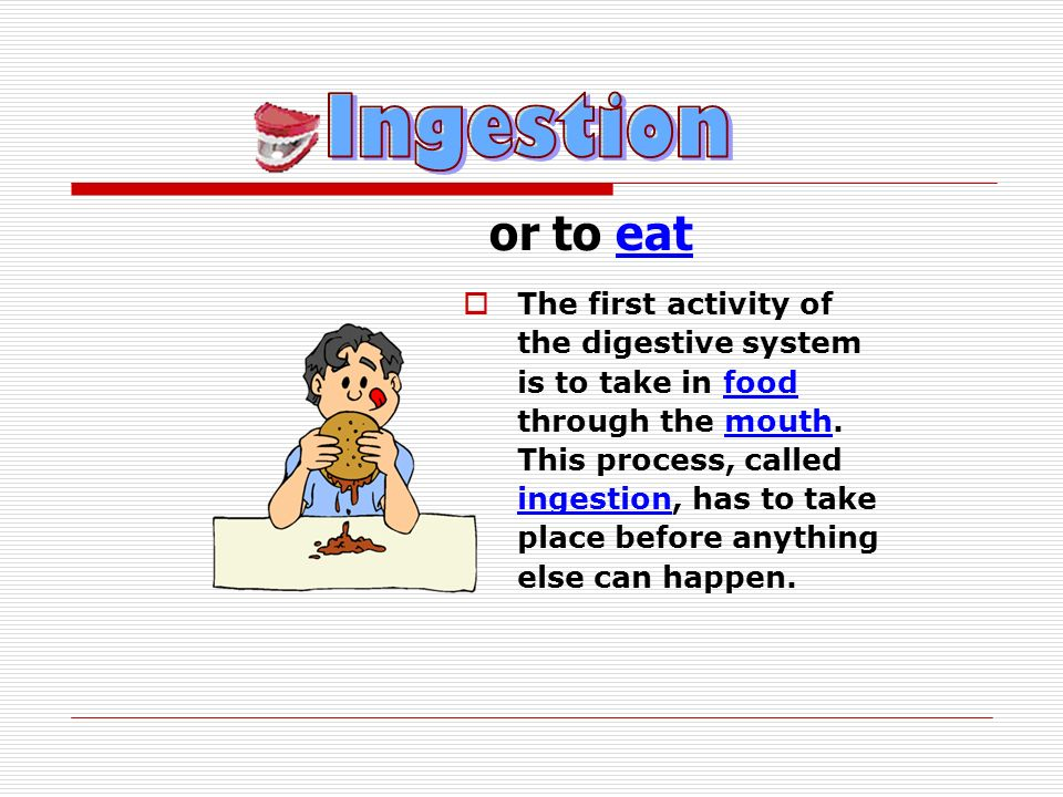 or to eat The first activity of the digestive system