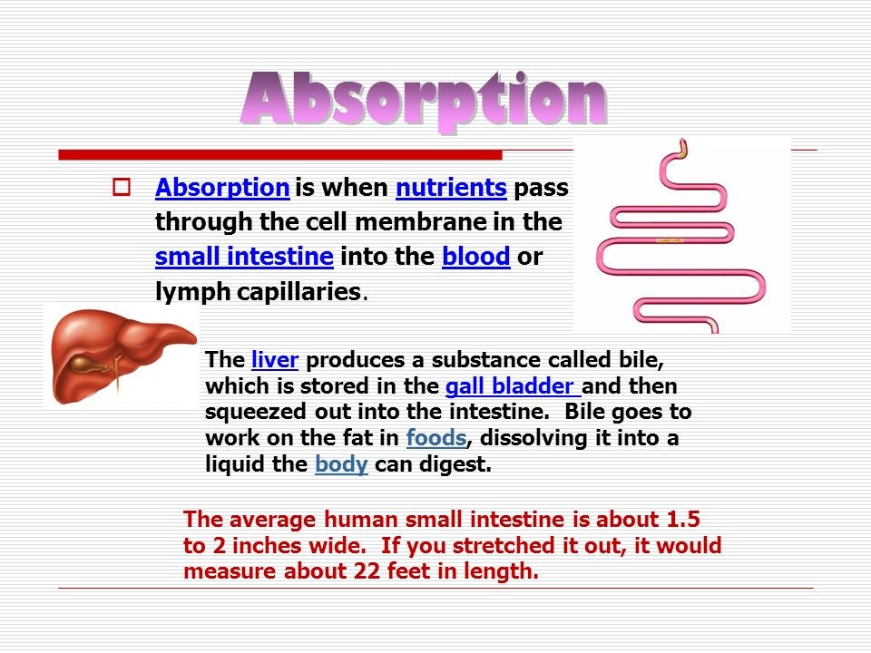 Absorption is when nutrients pass through the cell membrane in the