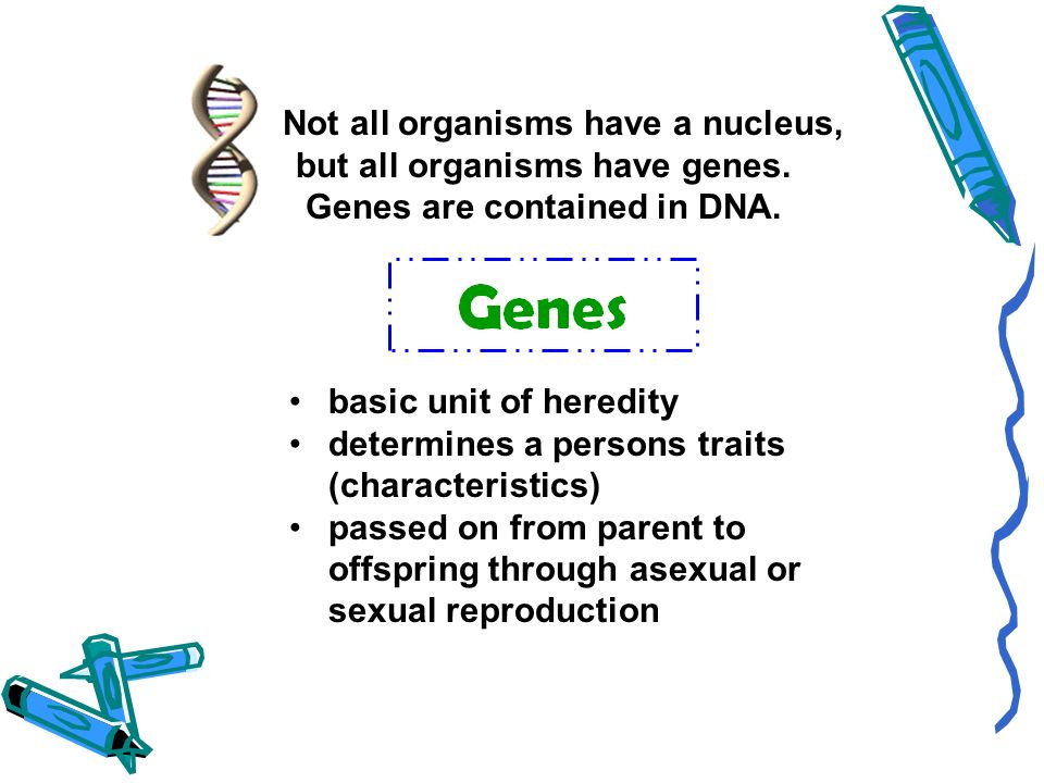 Not all organisms have a nucleus, but all organisms have genes.