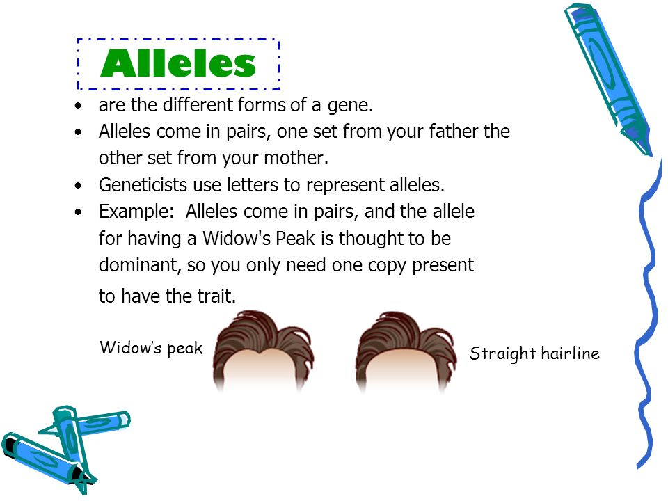 Alleles are the different forms of a gene.