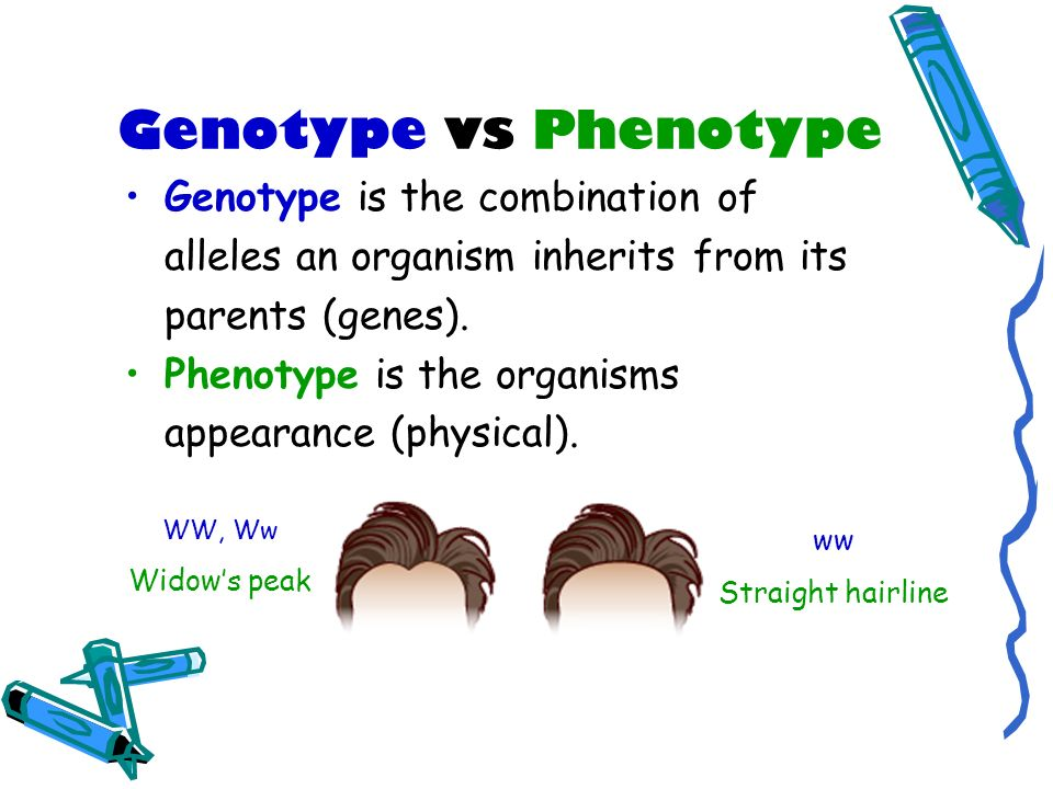 Genotype vs Phenotype Genotype is the combination of