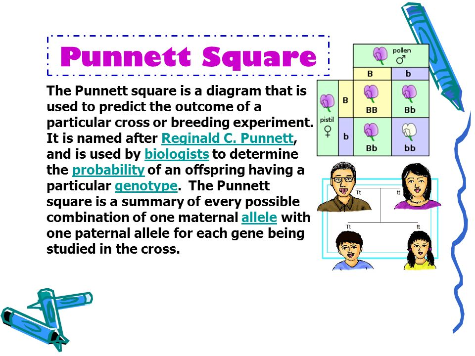 Punnett Square The Punnett square is a diagram that is