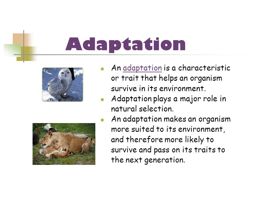 Adaptation An adaptation is a characteristic