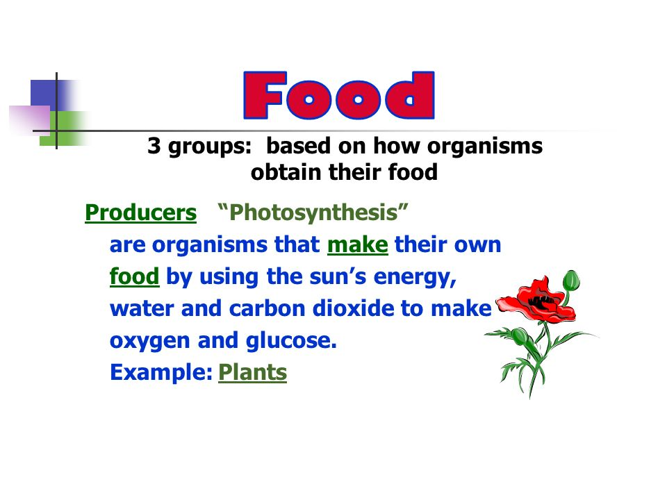 3 groups: based on how organisms obtain their food