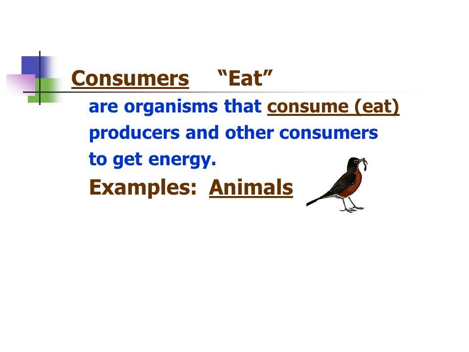 Consumers Eat Examples: Animals are organisms that consume (eat)