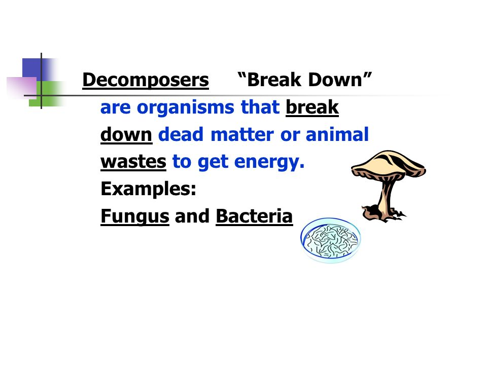 Decomposers Break Down