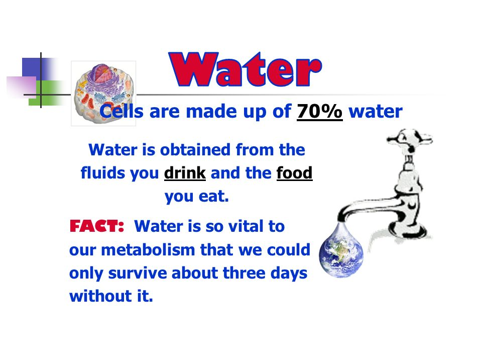 Water Cells are made up of 70% water Water is obtained from the