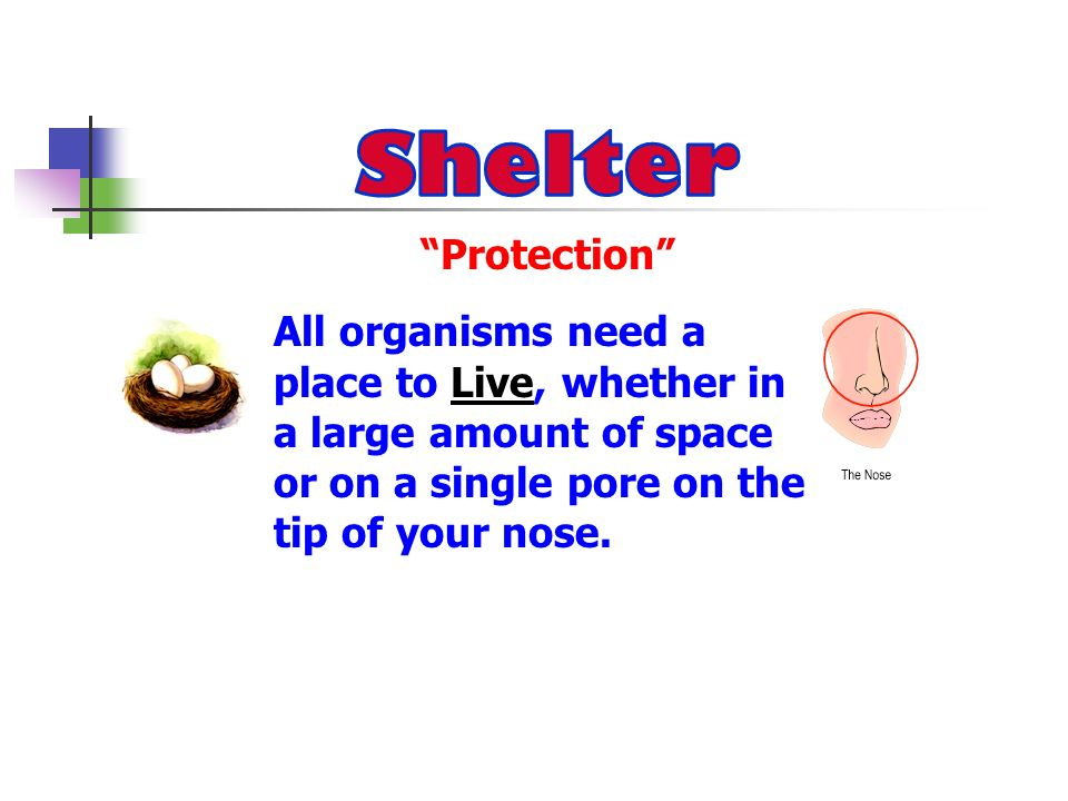 Shelter All organisms need a Protection place to Live, whether in