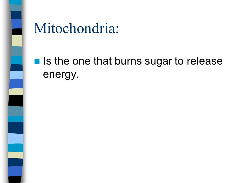 Mitochondria: Is the one that burns sugar to release energy.