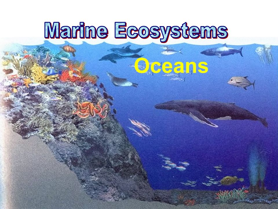 Marine Ecosystems Oceans